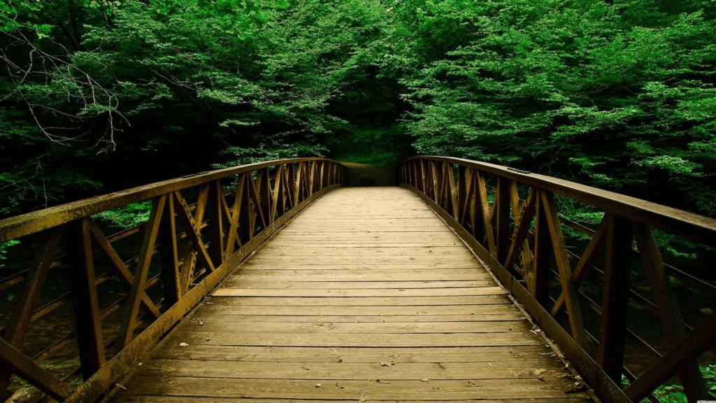 Schools Bridging Faith and Science